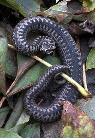 vilka djur äter upp ormar